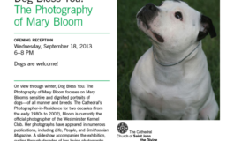 """"""" Dog Bless You"""" The Photography Of Mary Bloom."""