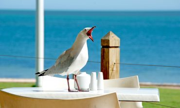 'THE SEAGULL'
